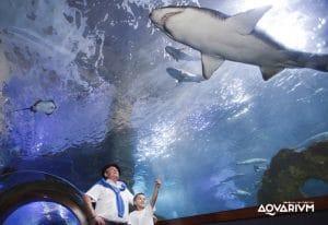 Los mejores acuarios de España para visitar con niños