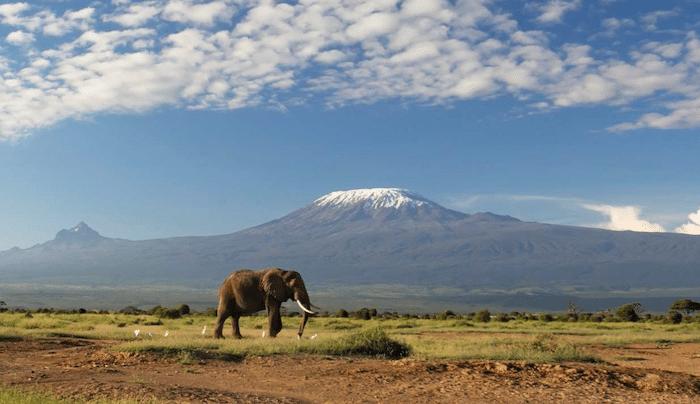 Safari con niños en África