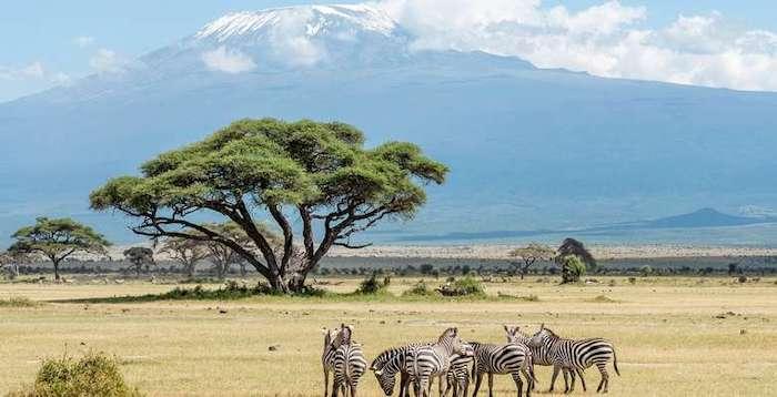 Safari con niños en Kenia