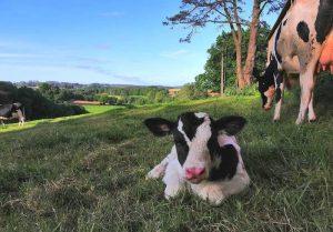 Visitar una granja ecológica en A Coruña con niños