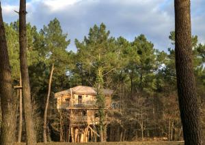 Dormir en una cabaña en los árboles en Francia con niños