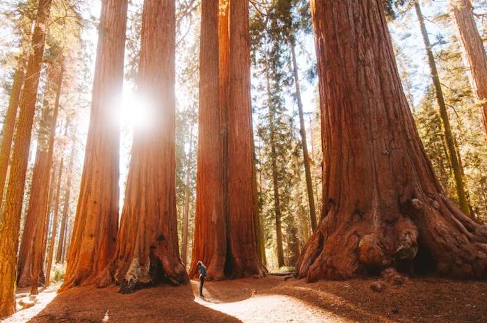 Rutas y excursiones con niños en California